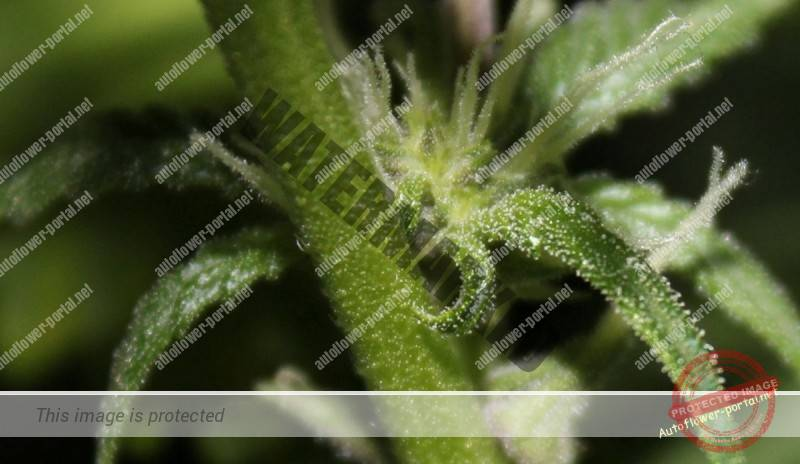 Stunted Grows Sour
