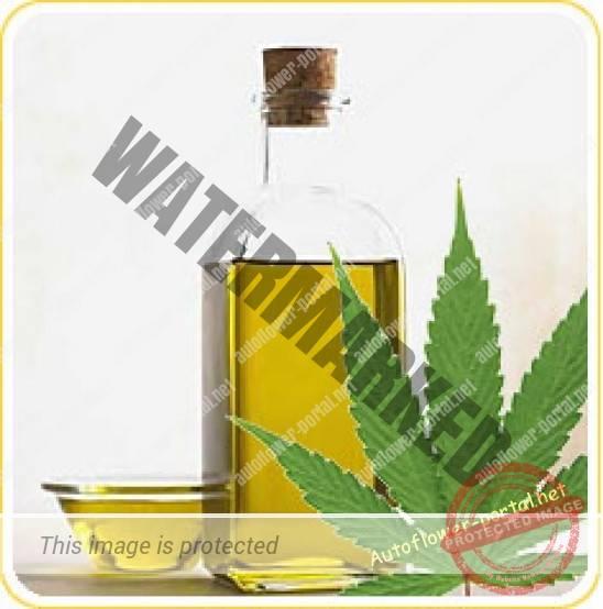 Cannabinoids in Cannabis Oils