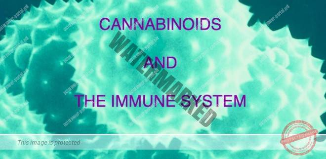 Cannabinoids and the immune system
