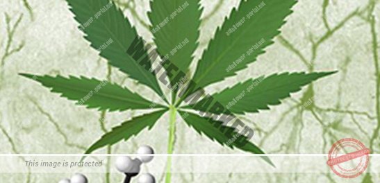 Cannabinoids-and-cancer-547x264.png