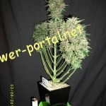 Plant shaping gallery