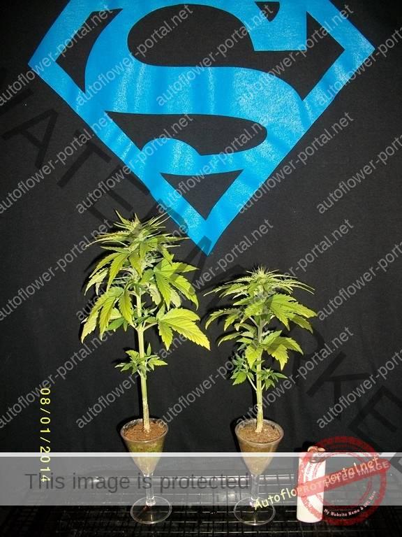 Mirco grow gallery