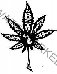 Cannabis development – part I