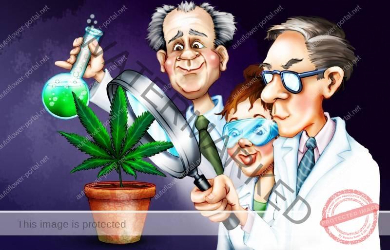 Medical Cannabis Research News