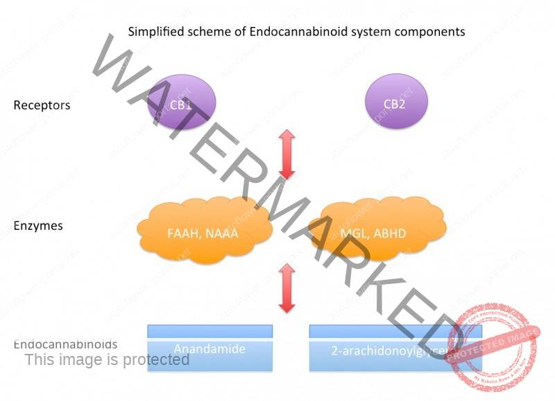 Cannabinoids: Therapeutic mechanisms