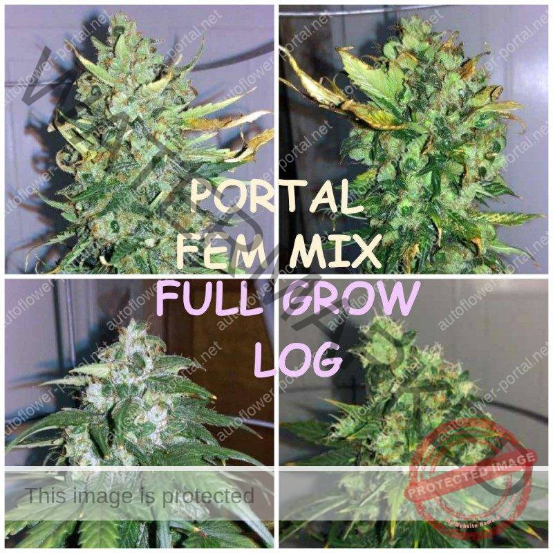 Autoflower Portal mix: full grow log by Pyrokev new